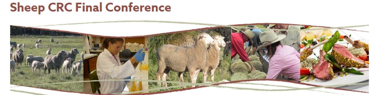 sheep crc blog